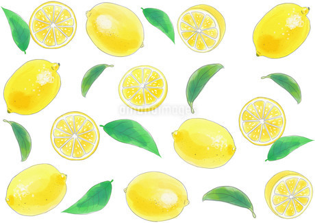 レモンのパターンのイラスト素材 [FYI01249717]