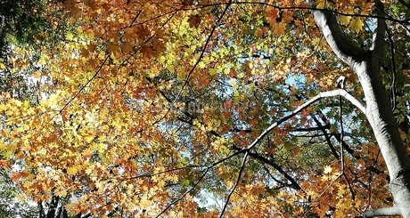 秋、はじまるの写真素材 [FYI01249887]
