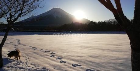 富士山  雪原の写真素材 [FYI01249921]