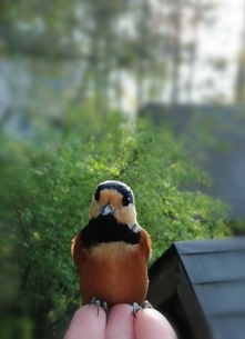 鳥  ともだちの写真素材 [FYI01249927]