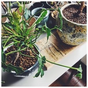 観葉植物と鉢の写真素材 [FYI01249957]