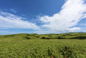 夏の礼文島の風景の写真素材 [FYI01250019]