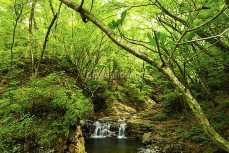 新緑の龍王峡の写真素材 [FYI01250024]