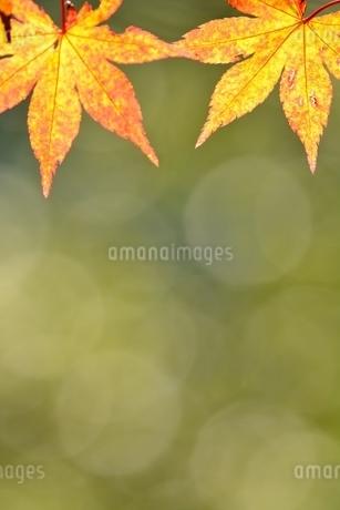 紅葉と玉ボケの写真素材 [FYI01250106]