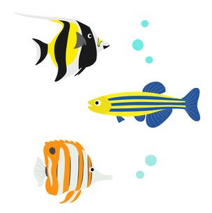 熱帯魚のセットのイラスト素材 [FYI01250241]