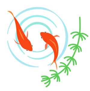 金魚と水面の波紋のイラスト素材 [FYI01250248]