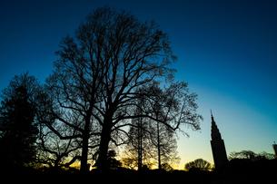 夕暮れと木のシルエットの写真素材 [FYI01250344]