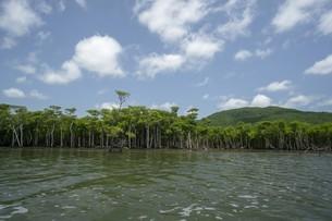 西表島のマングローブと空の写真素材 [FYI01250428]