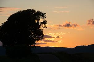 夕暮の空と大きな木のシルエット 美瑛町の写真素材 [FYI01250502]