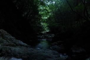 海より深い森の写真素材 [FYI01250555]