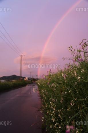虹の花の写真素材 [FYI01250560]