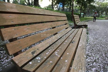 桜散るイスの写真素材 [FYI01250562]