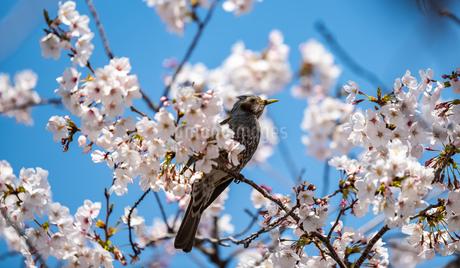 鳥の写真素材 [FYI01250620]