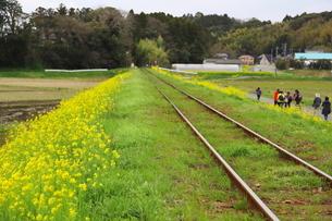 千葉県いすみ市のいすみ鉄道の写真素材 [FYI01250644]