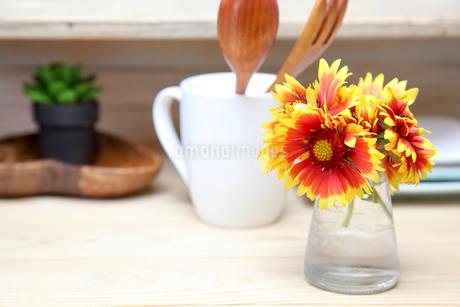 ガラス花瓶に挿したテンニンギクの写真素材 [FYI01250651]