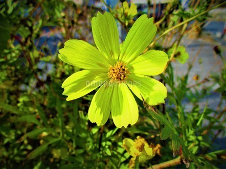 秋の植物の写真素材 [FYI01250668]