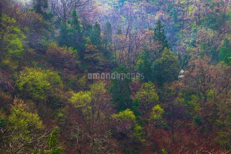 山の木々の写真素材 [FYI01250755]
