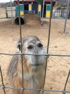 小動物の写真素材 [FYI01250793]