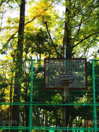 公園の古びたバスケットゴールの写真素材 [FYI01250904]
