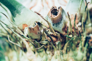 熱帯植物の写真素材 [FYI01251054]