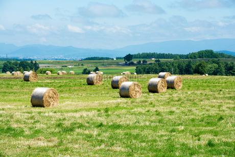 牧草ロールが広がる風景 北海道の写真素材 [FYI01251093]
