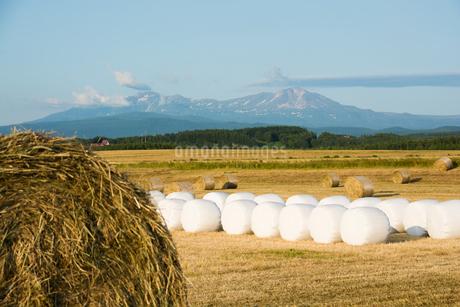 牧草ロールが広がる風景 北海道の写真素材 [FYI01251103]