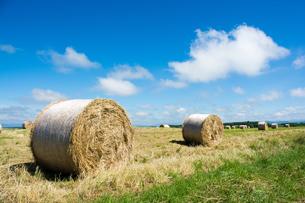 牧草ロールが広がる風景 北海道の写真素材 [FYI01251108]