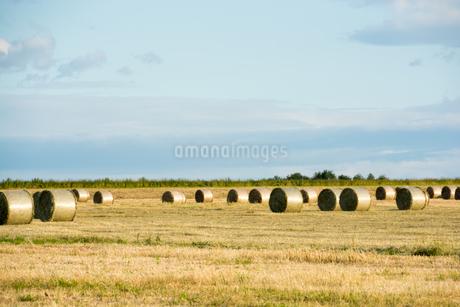 牧草ロールが広がる風景 北海道の写真素材 [FYI01251112]