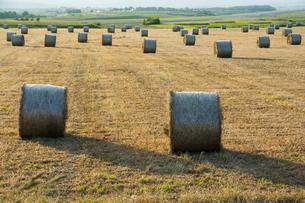 牧草ロールが広がる風景 北海道の写真素材 [FYI01251113]