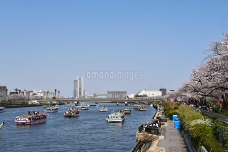 春の隅田川の写真素材 [FYI01251116]