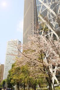 西新宿高層ビルと桜の写真素材 [FYI01251159]
