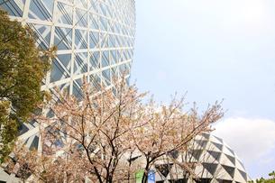 西新宿高層ビルと桜の写真素材 [FYI01251160]