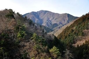 大室山の写真素材 [FYI01251196]