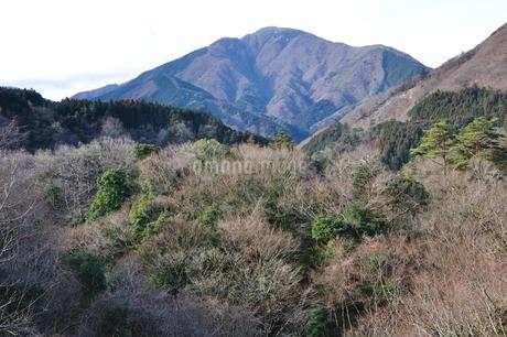 大室山の写真素材 [FYI01251198]