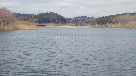 宮城県登米市平筒(びょうどう)沼 3の写真素材 [FYI01251210]