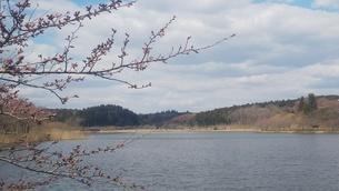 宮城県登米市平筒(びょうどう)沼 4の写真素材 [FYI01251211]