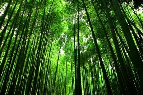 竹林の写真素材 [FYI01251303]