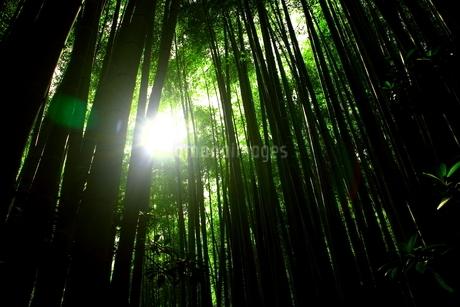 竹林の写真素材 [FYI01251305]