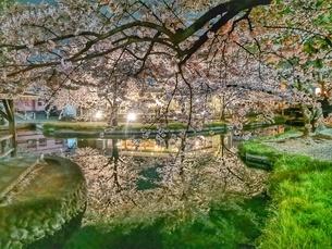 夜桜水鏡の写真素材 [FYI01251306]
