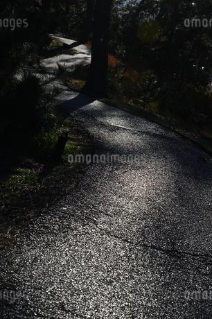 光る道の写真素材 [FYI01251331]