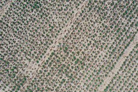 ドローンで撮影したキャベツ畑の写真素材 [FYI01251492]