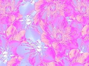 花の写真素材 [FYI01251499]