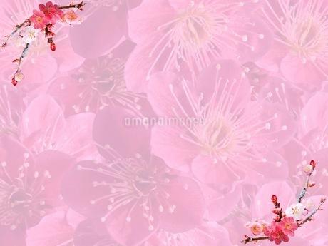 花の写真素材 [FYI01251501]