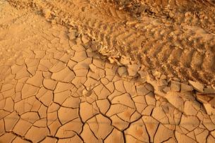 乾燥による地割れと轍の写真素材 [FYI01251660]