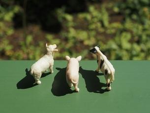 ミニチュアの家畜たちの写真素材 [FYI01251666]