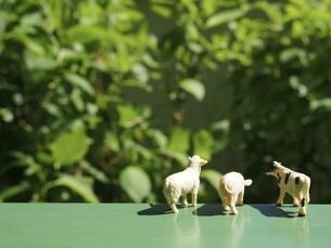 ミニチュアの家畜たち8の写真素材 [FYI01251675]