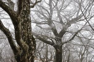 大室山の樹林帯の写真素材 [FYI01251905]