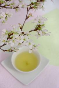 さくらと煎茶の写真素材 [FYI01252081]