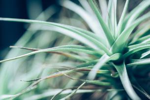 熱帯植物の写真素材 [FYI01252132]