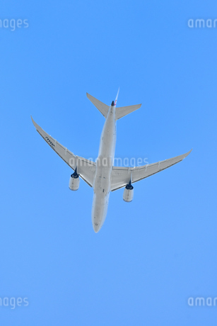 離陸した旅客機の写真素材 [FYI01252146]